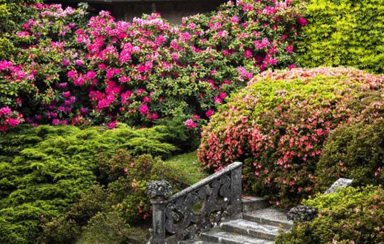 Blühende Gartenpracht und Villenkultur